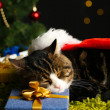 Cute cat lying on carpet with Christmas decor — Stock Photo #37097501