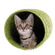 Little kitten in wicker basket isolated on white — Stock Photo