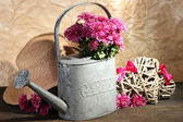 Bouquet of pink chrysanthemum in watering can on wooden table — Stock Photo