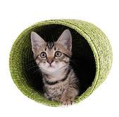 Little kitten in wicker basket isolated on white — Stock Photo