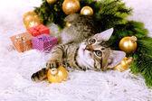 Gatito con decoraciones de la navidad en alfombra — Foto de Stock