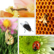 Collage of insects — Stock Photo