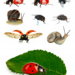 Stock Photo: Collection of insects isolated on white