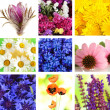 Wildflowers collage — Stock Photo