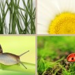 Stock Photo: Collage of insects