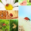 Stock Photo: Collage of insects and flowers