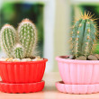Cactuses in flowerpots, on wooden windowsill — Stock Photo