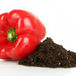 Red pepper with ground isolated on white — Stock Photo