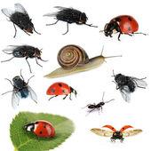 白で隔離される昆虫のコレクション — ストック写真