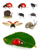 Samlingen av insekter isolerad på vit — 图库照片
