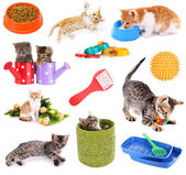 Collage of kittens and different stuff for them isolated on white — 图库照片