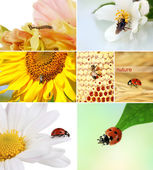Collage of insects and flowers — Stock Photo