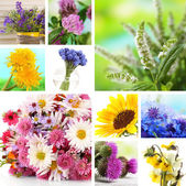 Wildflowers collage — Stock Photo