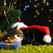 Stock Photo: Cute cat lying on carpet with Christmas decor