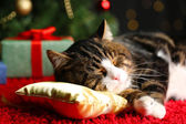 Cute cat lying on carpet with Christmas decor — 图库照片