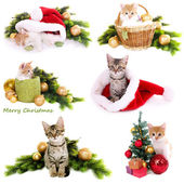 Collage of kittens with Christmas decorations isolated on white — Stock Photo