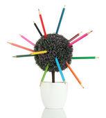 Decoratieve boom met kleurrijke potloden in pot geïsoleerd op wit — Stockfoto