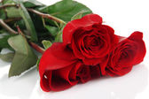 Beautiful red roses isolated on white — Stock Photo