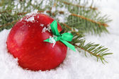 Red apple with fir branches in snow close up — Stock Photo