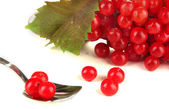 Red berries of viburnum in teaspoon isolated on white — Stock Photo