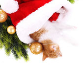 маленький котенок с рождественские украшения, изолированные на белом — Стоковое фото