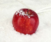 Red apple in snow close up — Stock Photo