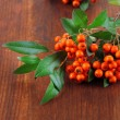 Stock Photo: PyracanthFirethorn orange berries with green leaves, on wooden background