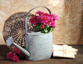 Bouquet of pink chrysanthemum in watering can on wooden table — Foto de Stock