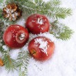 Stock Photo: Red apples with fir branches and bumps in snow close up