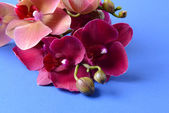 Beautiful blooming orchid on color background — Stock Photo