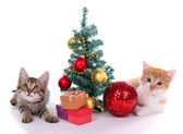 Little kittens with Christmas decorations isolated on white — Stockfoto