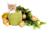 Little kitten with Christmas decorations isolated on white — Fotografia Stock