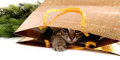 Little kitten in package isolated on white — Foto Stock