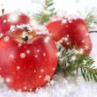 Red apples with fir branches in snow close up — Stock Photo