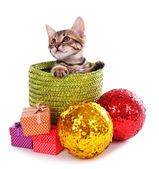 Little kitten with Christmas decorations isolated on white — Stock Photo