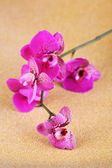 Beautiful orchid on golden background — Stock Photo