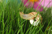 Beautiful snail on green grass, close up — Stock Photo
