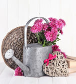 Bouquet of pink chrysanthemum in watering can on white wooden background — Zdjęcie stockowe