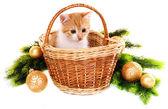 Lilla kattunge med julpynt isolerad på vit — Stockfoto