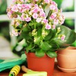 Beautiful flower in pot on wooden table on window background — Stock Photo #37723153
