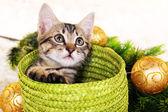 Little kitten with Christmas decorations on carpet — Zdjęcie stockowe