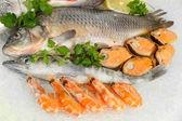 čerstvé mořské plody na ledě — Stock fotografie