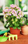 Hermosa flor en maceta en mesa de madera en el fondo de la ventana — Foto de Stock