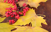 Beautiful autumn leaves and red berries on wooden background — Stock Photo