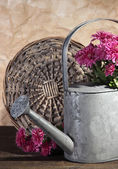 Bouquet of pink chrysanthemum in watering can on wooden table — Stockfoto
