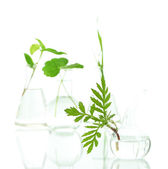 Plants in test tubes, isolated on white — Stock Photo