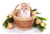 Little kitten with Christmas decorations isolated on white — Foto de Stock
