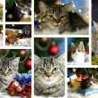 Christmas animals collage — Stock Photo