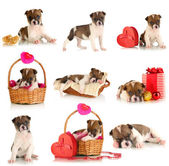 Collage of cute puppy isolated on white — Stok fotoğraf