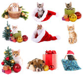 Christmas animals isolated on white — Stock Photo